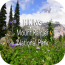 hiking-mount-rainier-national-park icon