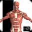 visual-anatomy icon